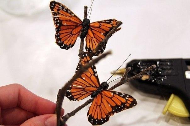Бабочки в банках