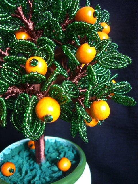 Дерево апельсиновое