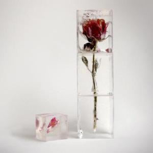 Роза во льду