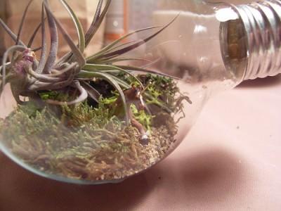 Террариум в лампочке